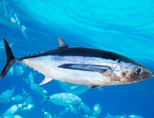 Radioactive Contamination in Seafood- Specifically Northern Pacific Canadian Albacore Tuna